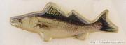 Rybářský odznak Candát